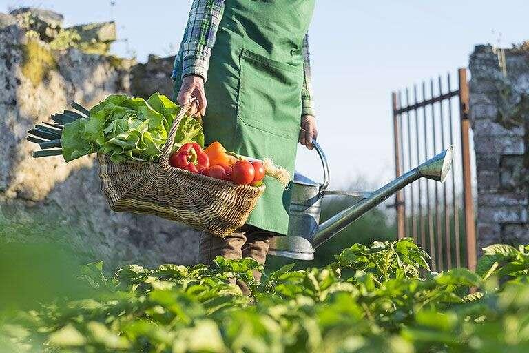 Organik Tarım İşi